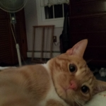 20141116 oliver cats