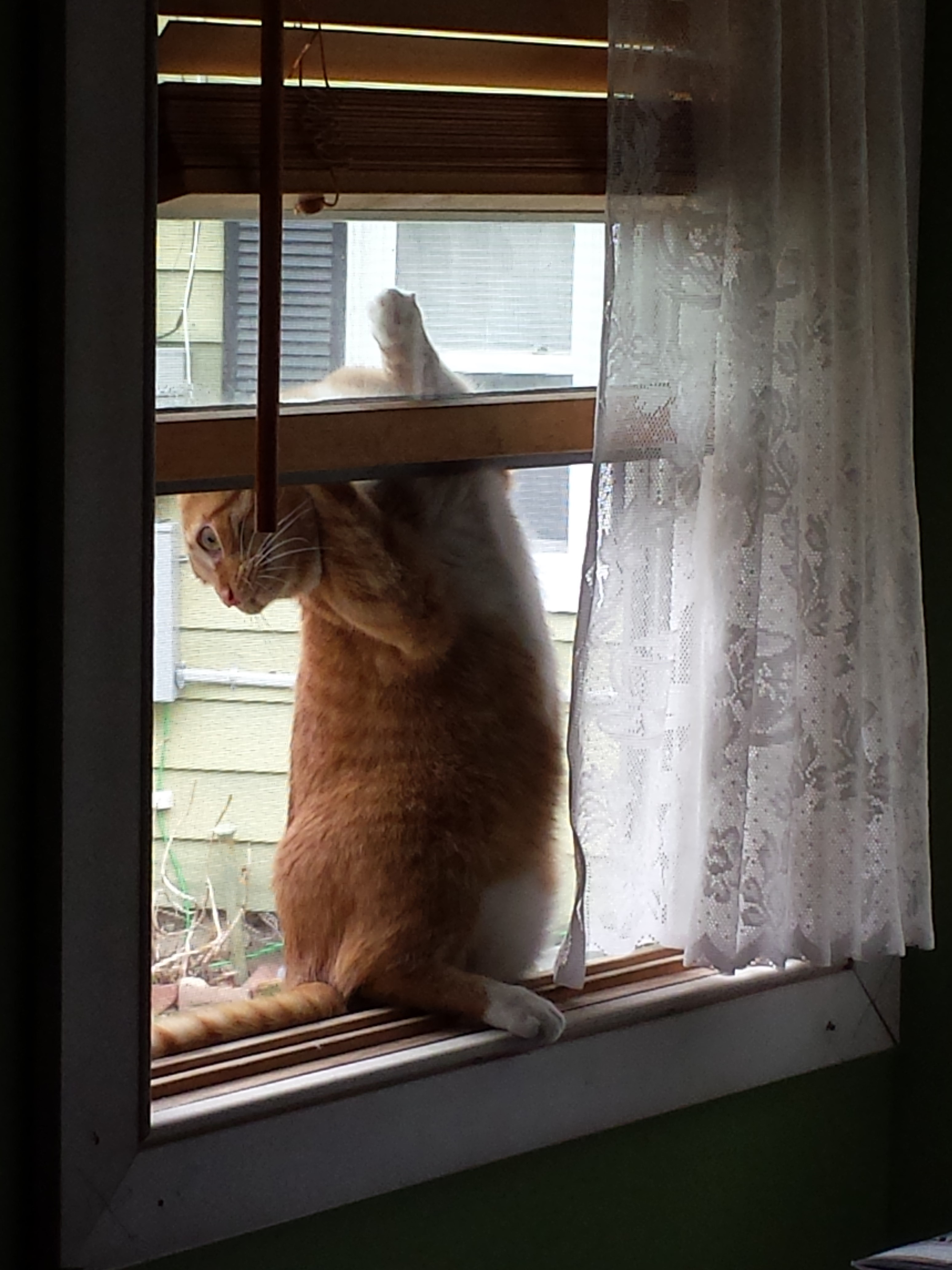 Oliver in window 2015