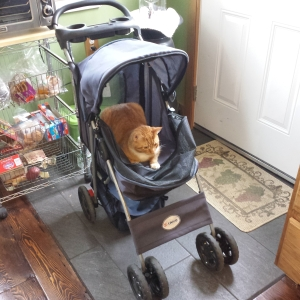 oliver in buggy