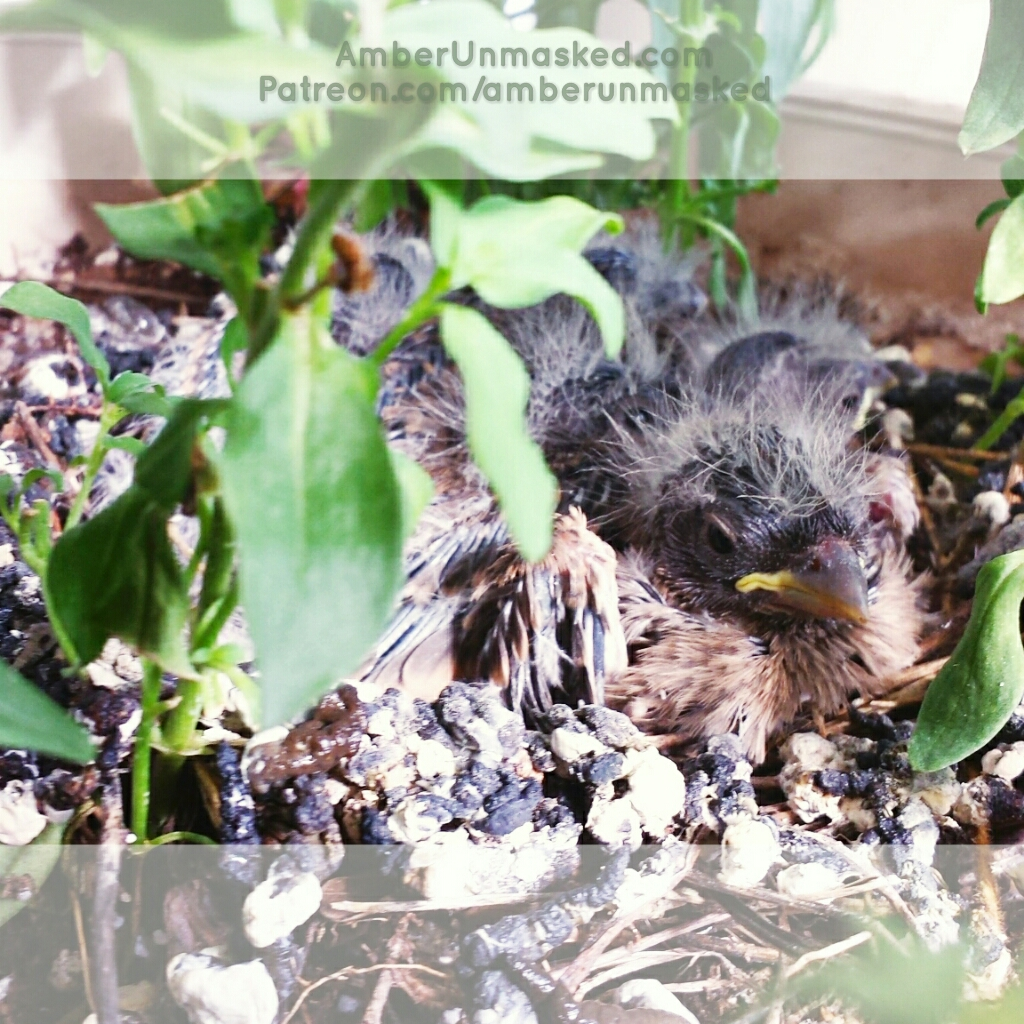 2017-06-26 baby finches birds