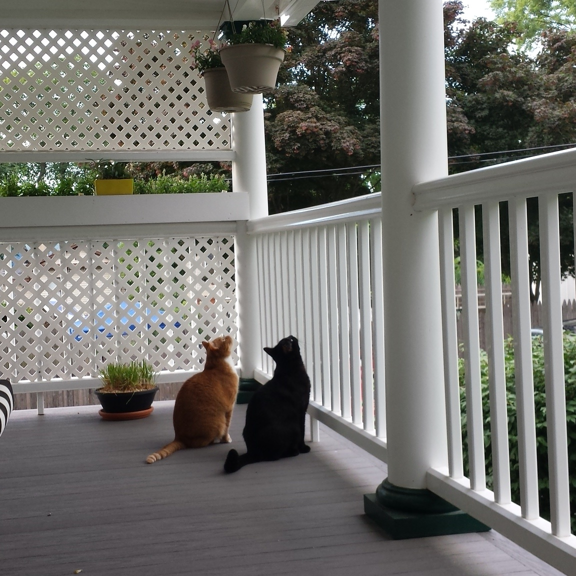Ollie and Gus cats 20170627_birdwatching