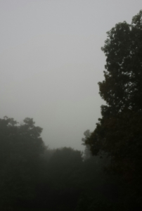 Fog over trees