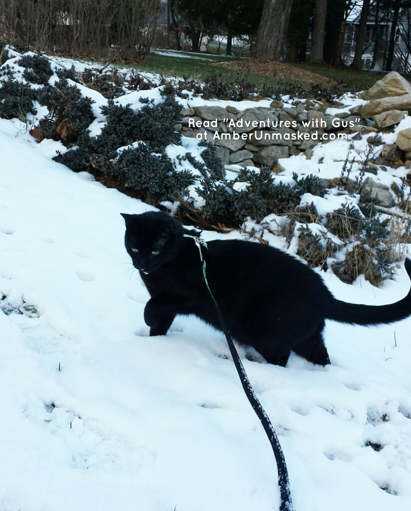 2017-12-11 Gus in the snow