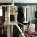 Gus biting the tower