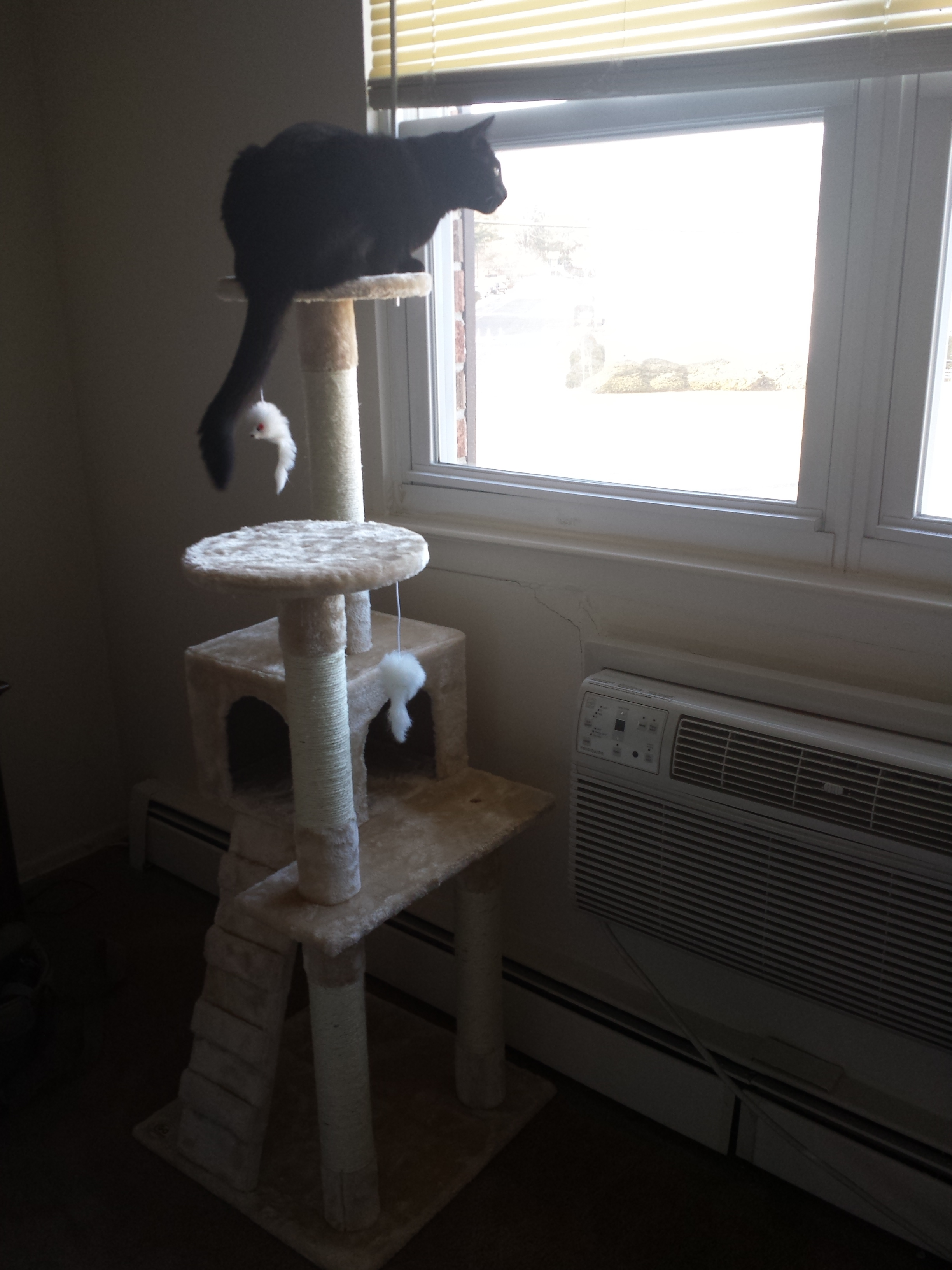 20180317 Gus tower