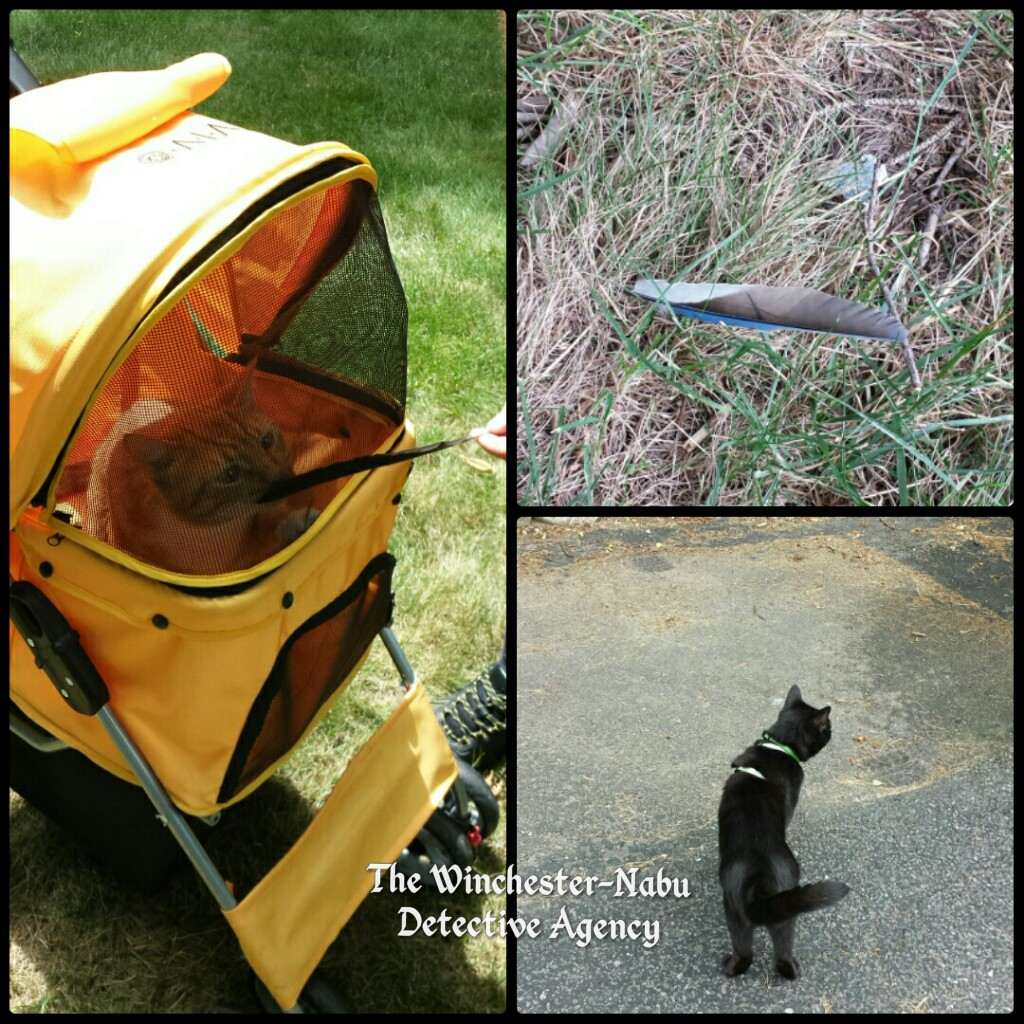 Cat adventures collage 072118
