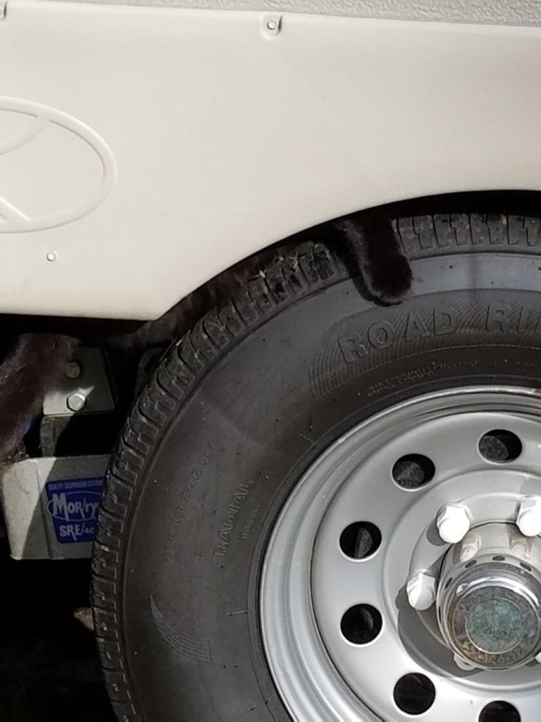 Gus' paw showing on top of a tire while he is inside the wheel well.