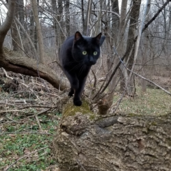 Gus on a tree branch