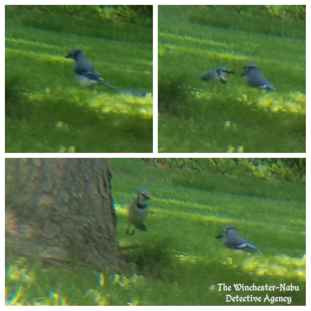 050819 bluejay party3