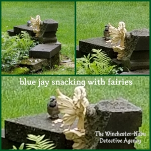 Louie Eggs blue jay snacking