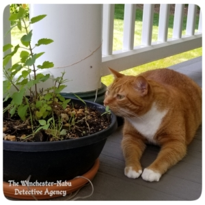 Oliver on the balcony with a potted catnip plant