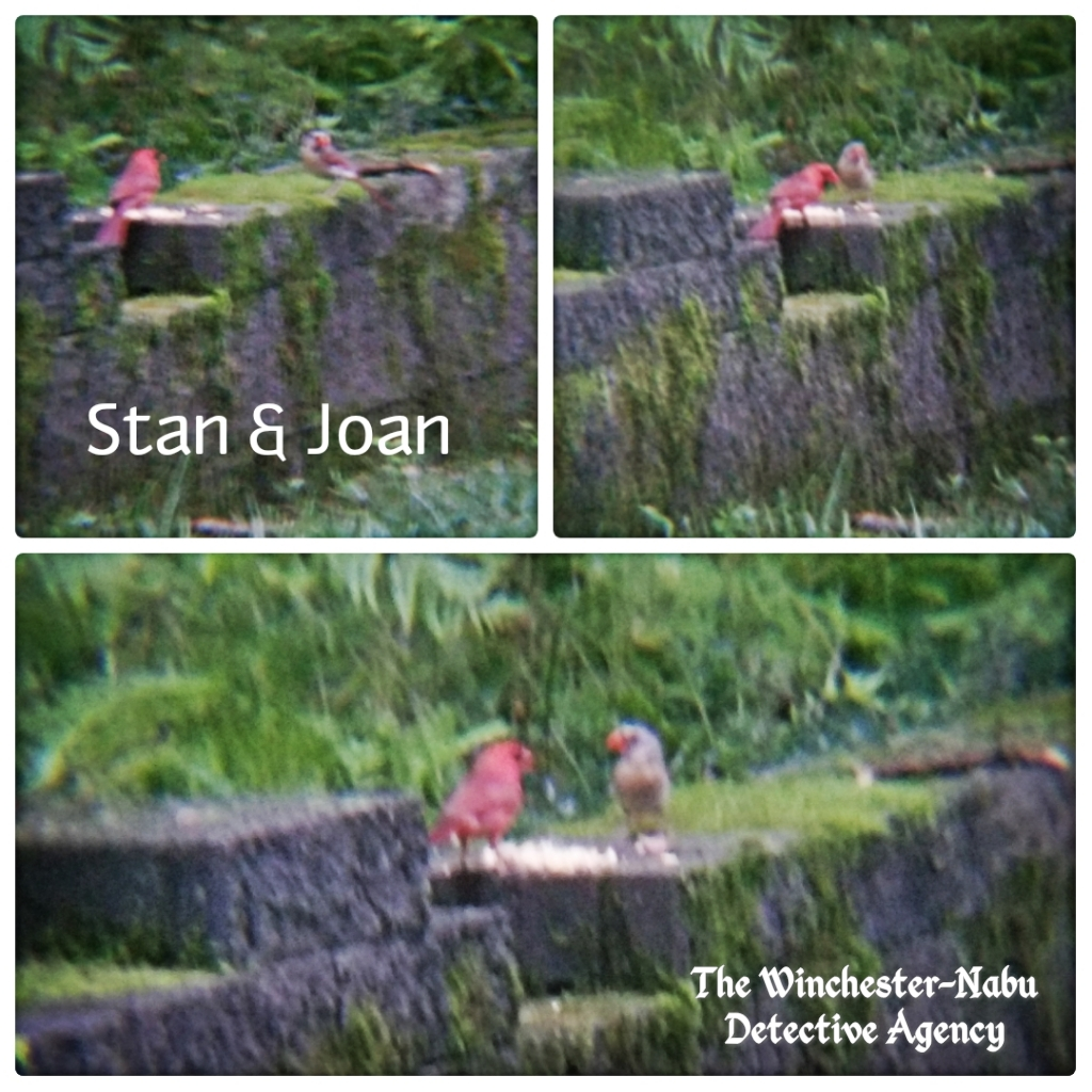 Stan and Joan cardinals