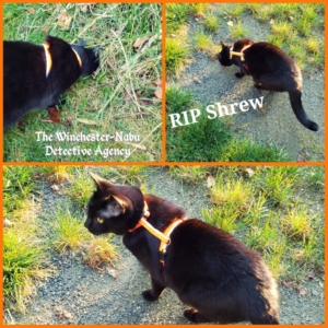 shrew capture and kill