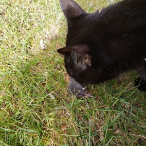 Gus with the body of a shrew.