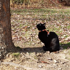 Gus at the base of maple tree