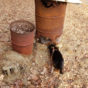 Gus investigating burn barrel