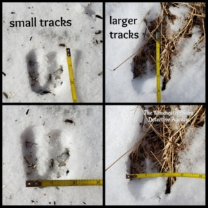 collage of tracks