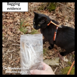 Gus and the evidence bag