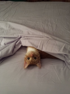 baby oliver under a bed sheet