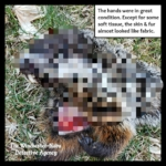 pixelated groundhog body