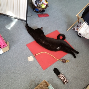 Gus on his red yoga mat