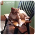 Oliver on the kitchen chair