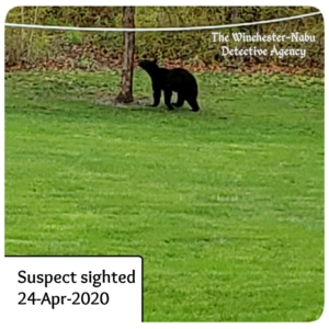 black bear approaching the tree
