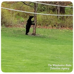 black bear standing at the tree
