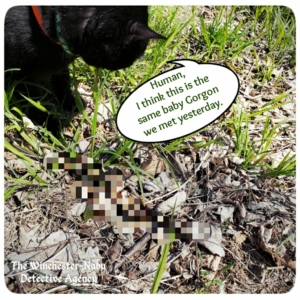 Gus finding snake in grass pixelated