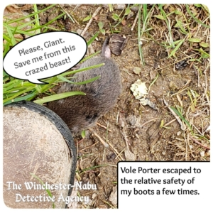 Vole Porter trying to find safety