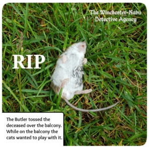 mouse dead in grass