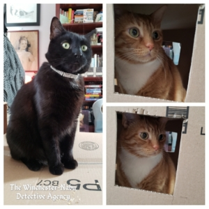 cats in box fort