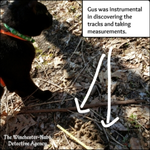 Gus investigating wildlife bear volkolak tracks