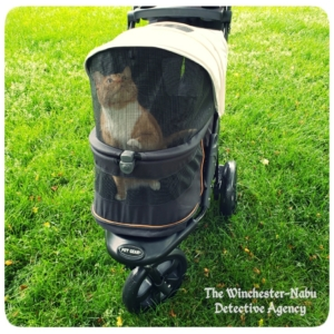 Oliver in his PetGear stroller