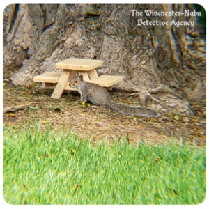 squirrel at picnic table