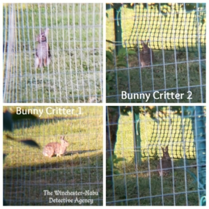 collage of bunny rabbit wolpertingers