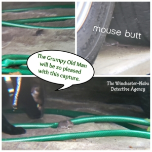tiny mouse at trailer