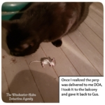 Gus and dead mouse