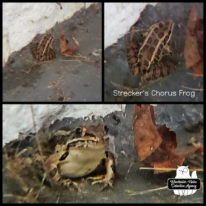collage of frog