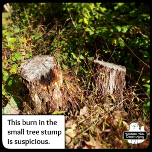 burned tree stumps