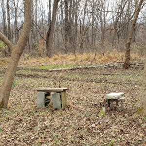 make shift benches in the woods