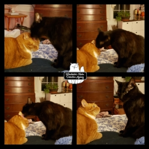 collage of Ollie and Gus on the bed