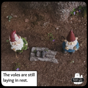vole funeral with gnomes