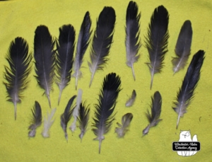 catbird murder feathers cleaned