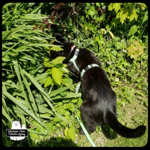 Gus in weeds looking for Paula Vole