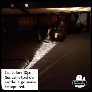 Gus with mouse