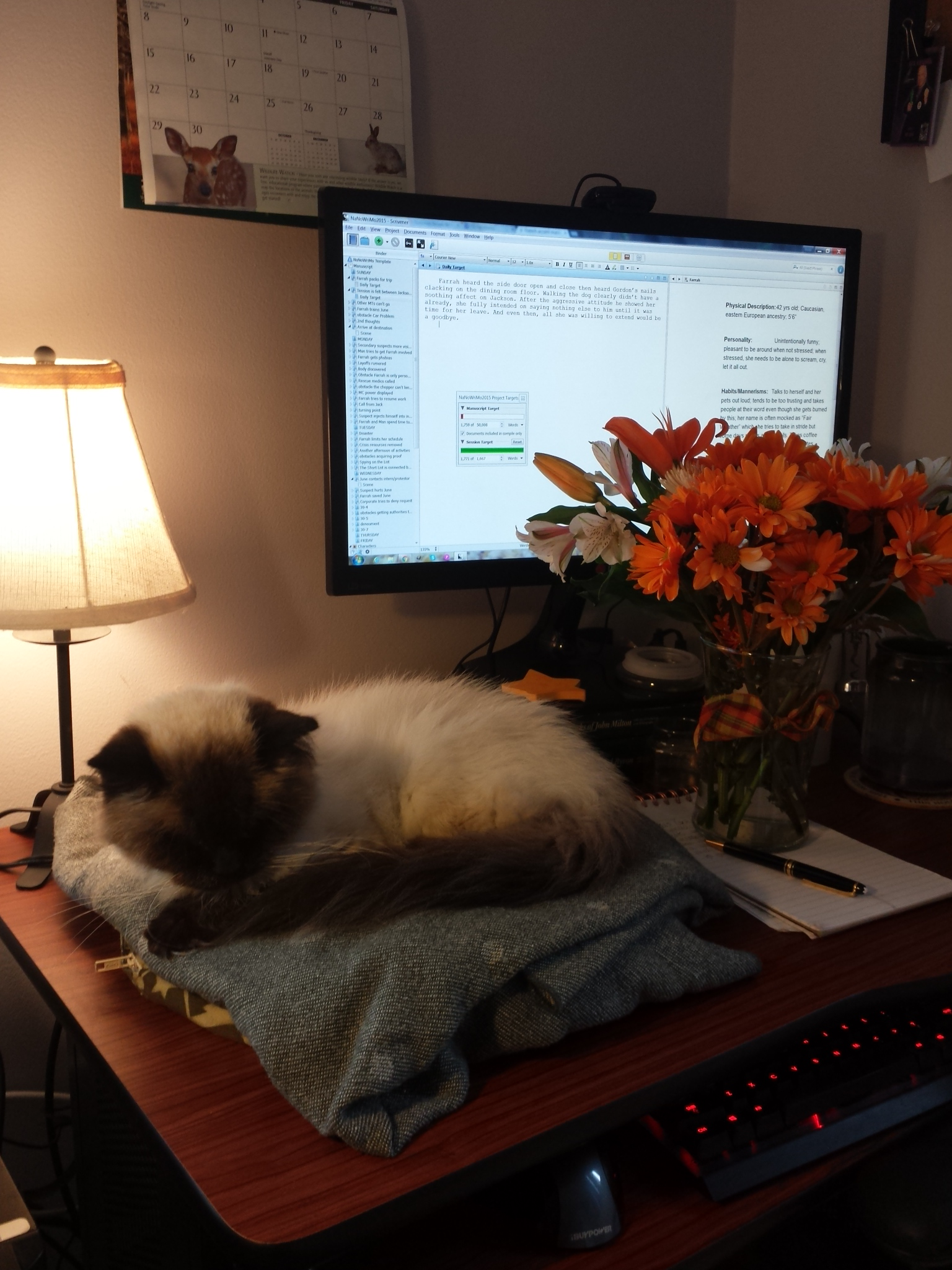 Caico cat NaNoWriMo 20151101_dayone