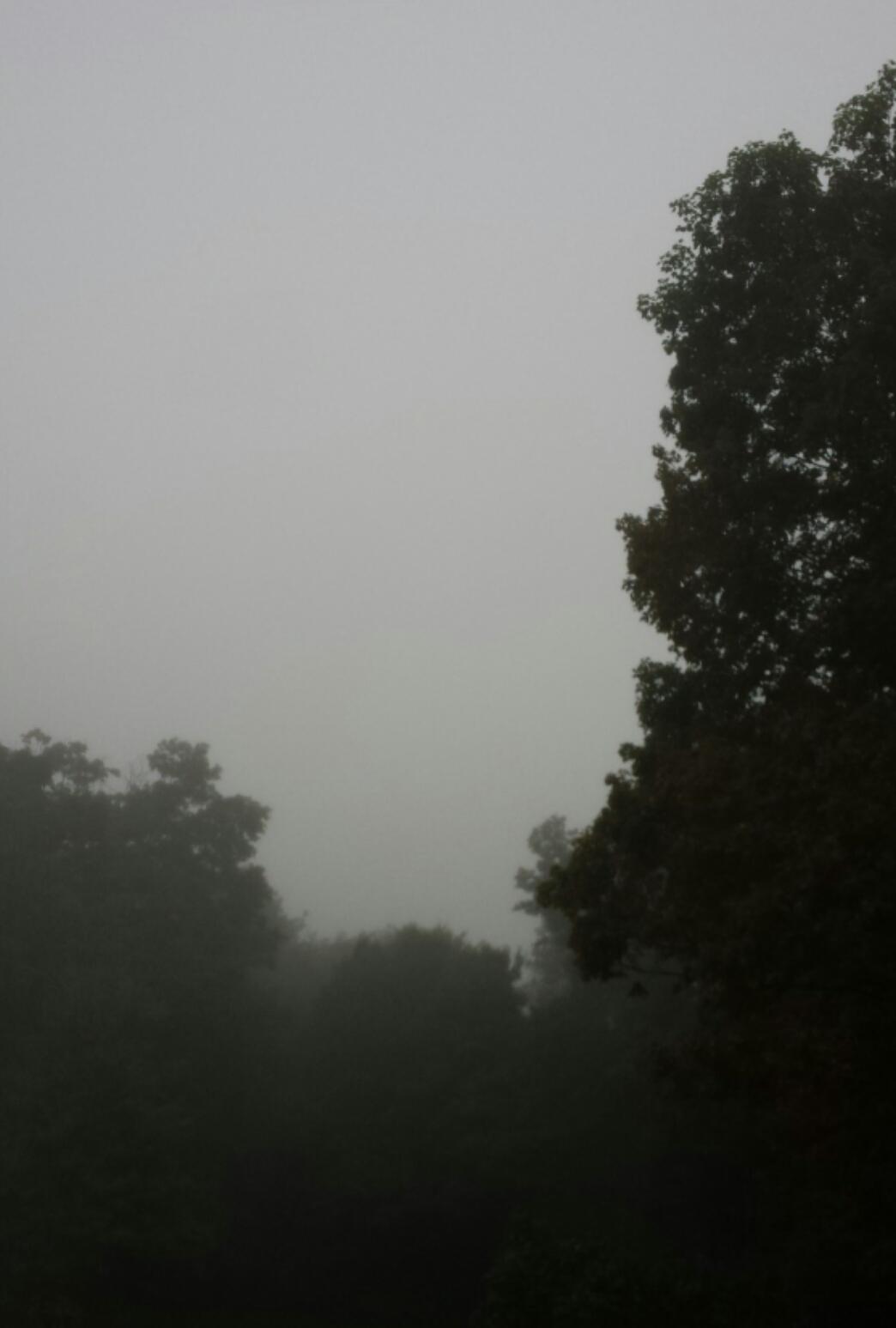 Fog over trees 20170917_202952