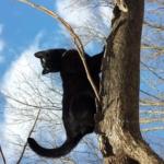 Gus in Tree
