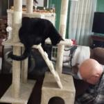 Gus supervising
